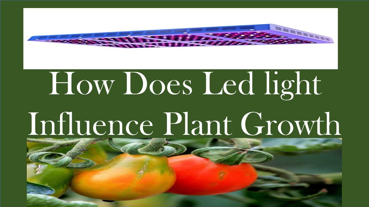 led light influence plant growth