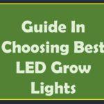 Guide In Choosing Best LED Grow Lights