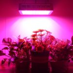 Morsen 1200W LED review