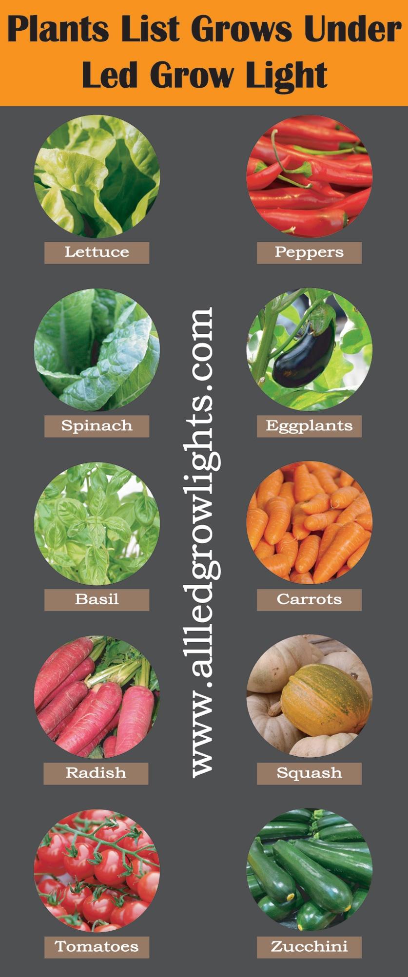 Plants_List_Grows_Under_Led-infograph