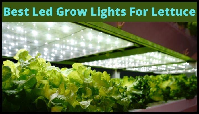 best led grow light for lettuce