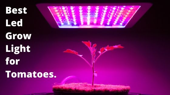 Best Led Grow Light For Tomatoes In