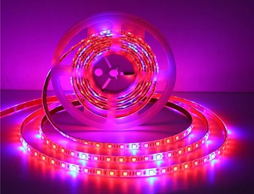 Led Grow Light Strips Review – Best For Your plants