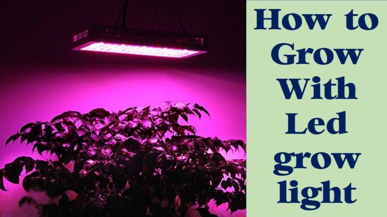 how to grow with led grow light