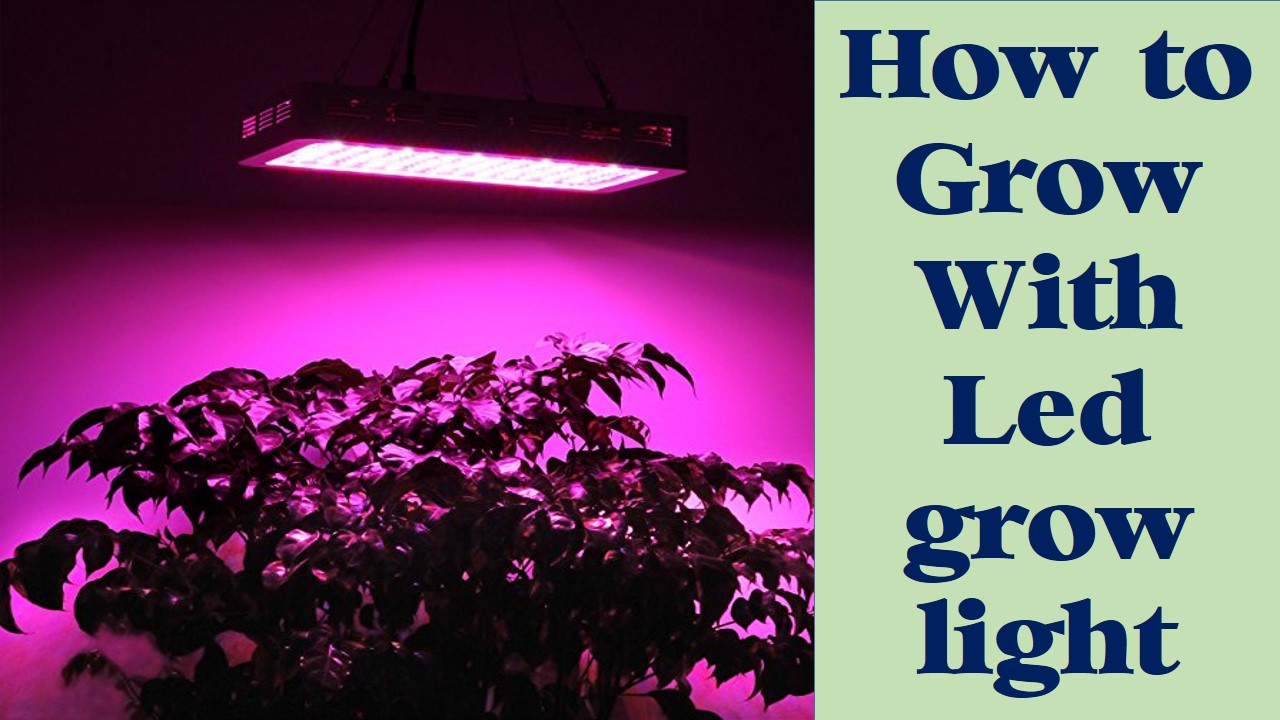 how to grow with led grow light