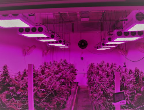 Top 5 Best Commercial Led Grow Lights Reviews in 2019