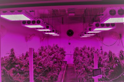 best commercial led grow light review