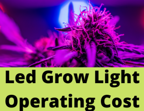Top 5 Best Led Grow Lights Canada in 2020 (Don't Miss)