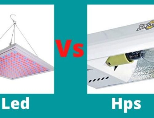 The Battle between LED Vs HPS Grow Lights (You must Read)