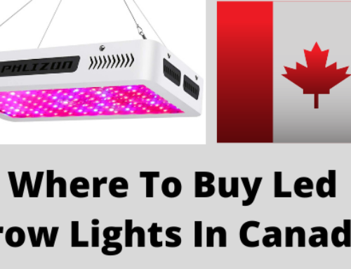 Where To Buy Led Grow Lights In Canada 2020 (Cheap and effective)