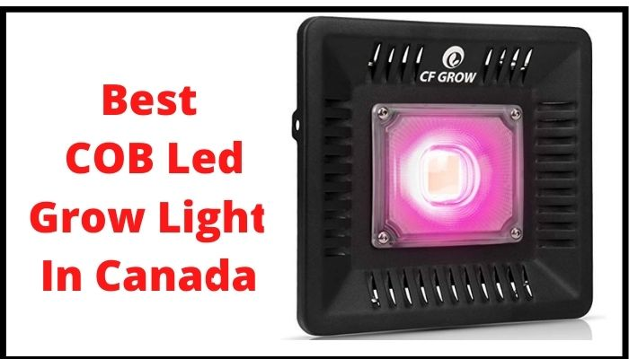 best cob led grow light in Canada